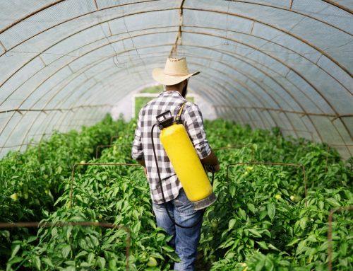 Queensland Fruit Fly Growers Update  (July 2021)